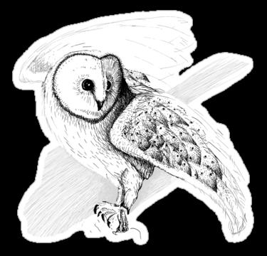 1377 Barn Owl
