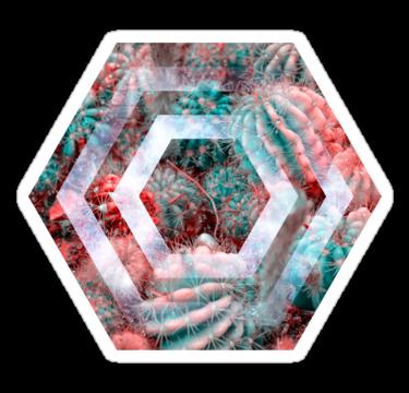 1410 Cactus - Hexagon