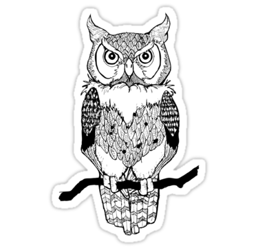 1665 Owl Drawing
