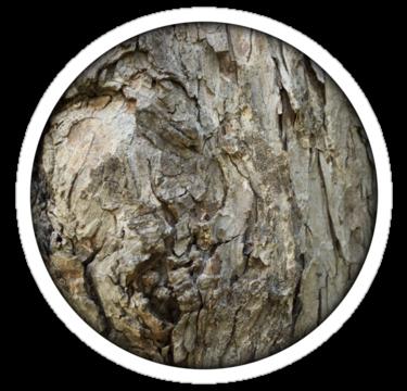 1795 Tree Bark Texture
