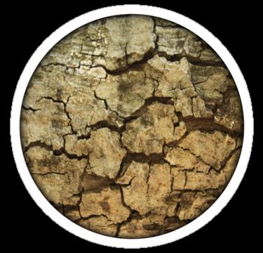 1796 Tree Bark Texture2