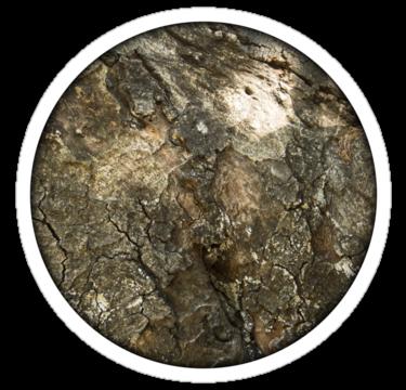 1797 Tree Bark Texture3