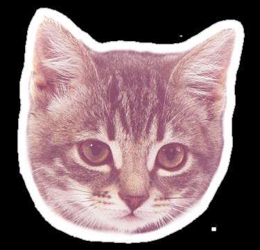 1979 Kitten