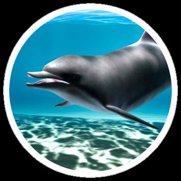 2927 Dolphin