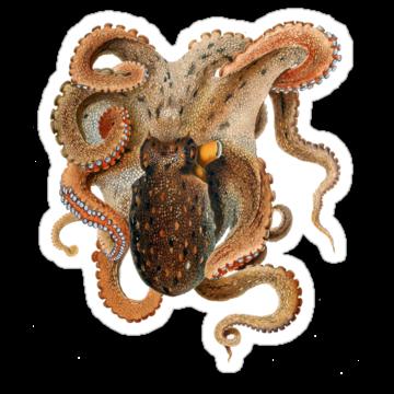 2950 Octopus