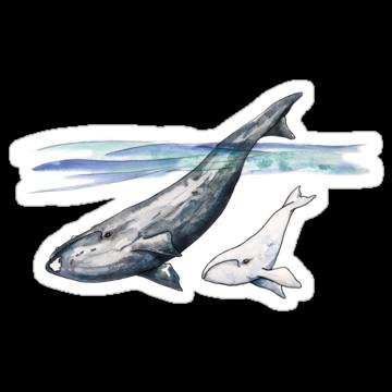 2972 White Whale Calf