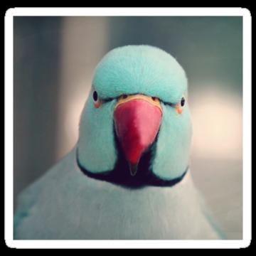 2977 Angry Bird