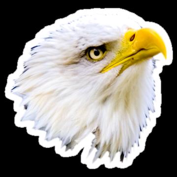 2978 Bald Eagle