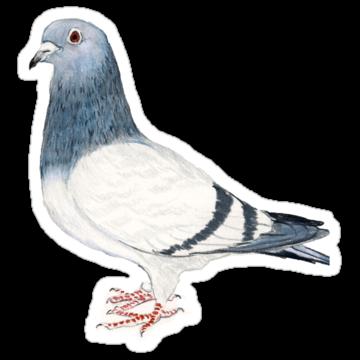 3005 Pigeon