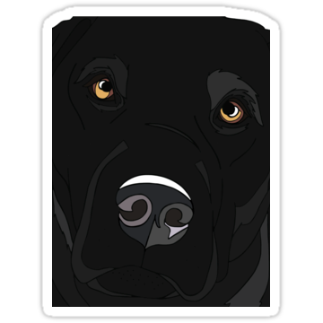 3029 Black Retriever