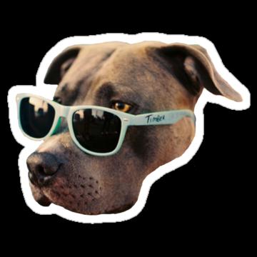 3034 Cool Dog