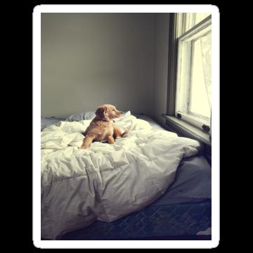 3037 Cute Dog