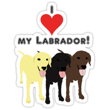 3056 I love my Labrador