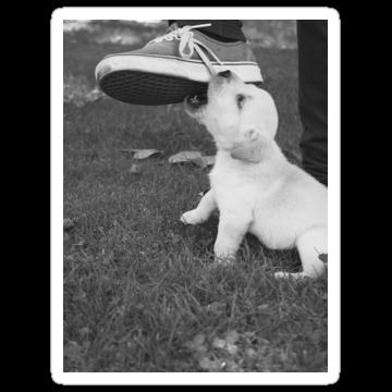 3063 Puppy